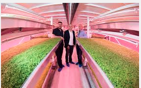 Microsoft #Env16: Digital Transformation of Growing Underground Crops